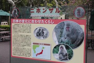 東京上野動物園 99