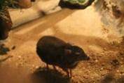 東京上野動物園 111
