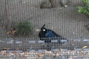 東京上野動物園 116