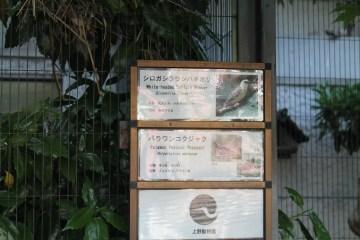 東京上野動物園 118