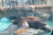 東京上野動物園 119