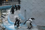 東京上野動物園 123