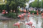 東京上野動物園 126
