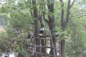 東京上野動物園 133