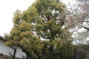 大阪城公園 24