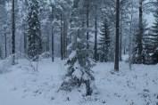 Raahe Winter 3