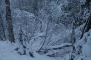 Frozen, swampy parts
