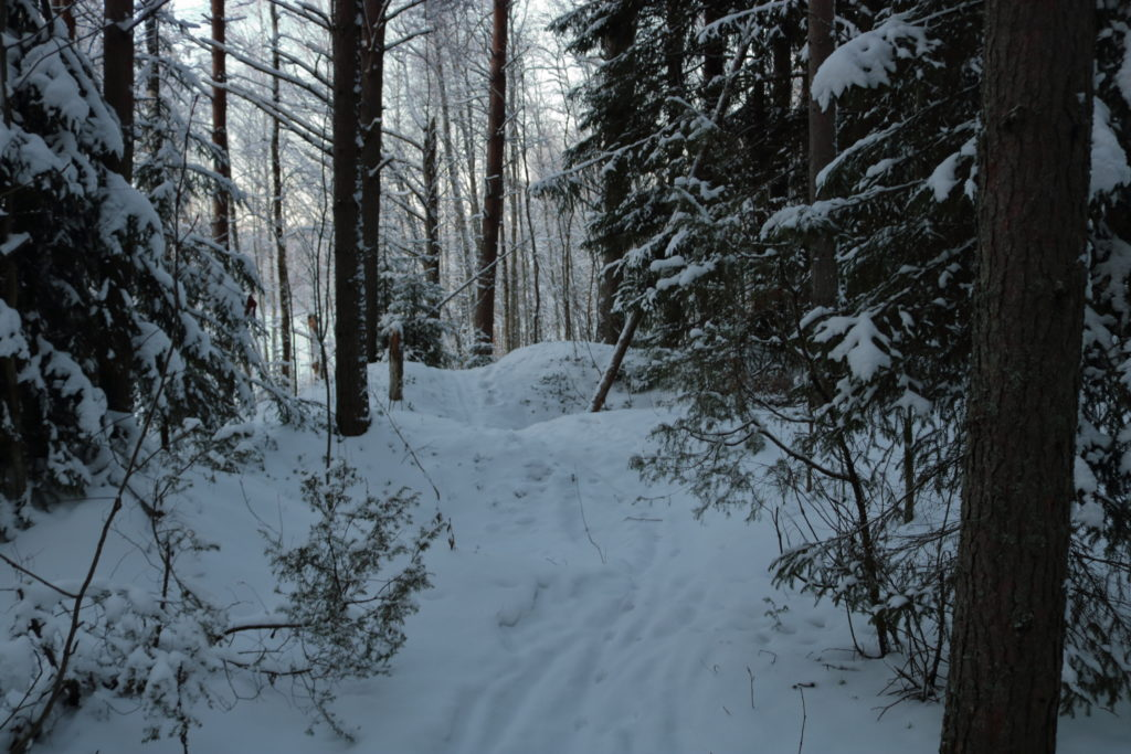 Small snowy hills along a forest path
