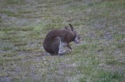 Rabbit on grass being derpy