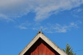 A bird on top of a red house