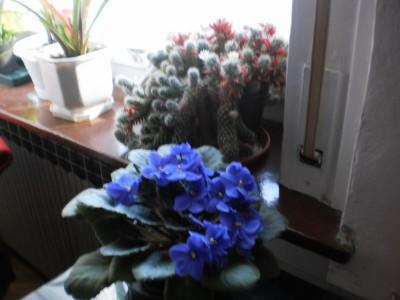 Cvijet2