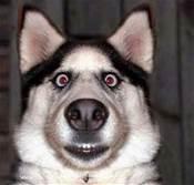 Funny_Dog