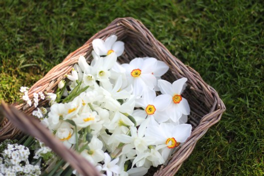 Basket of Narcissi