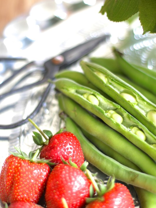 Broad Beans & Strawberries