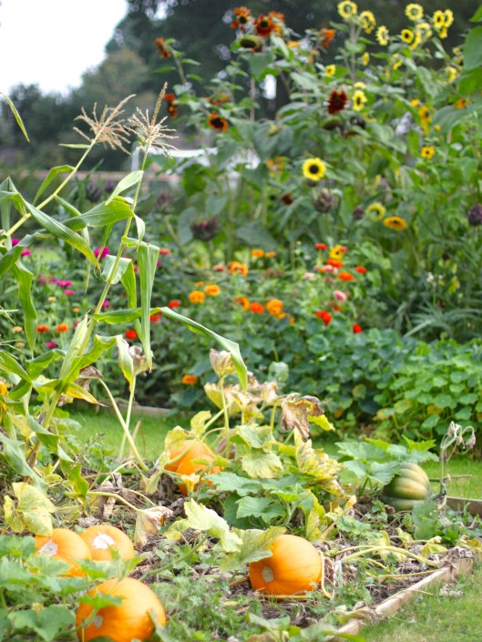 Pumpkins-And-Sunflowers
