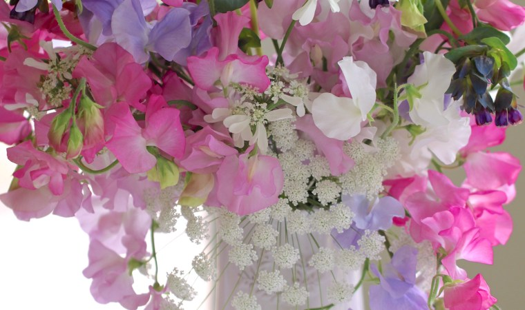 Growing-Sweetpeas