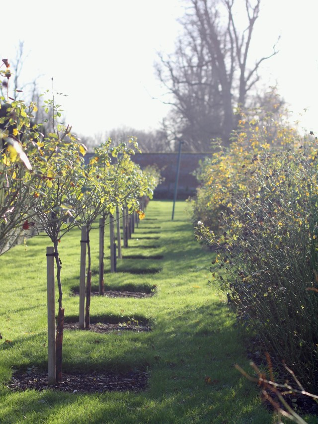 Glemham-Hall-Gardens-Winter