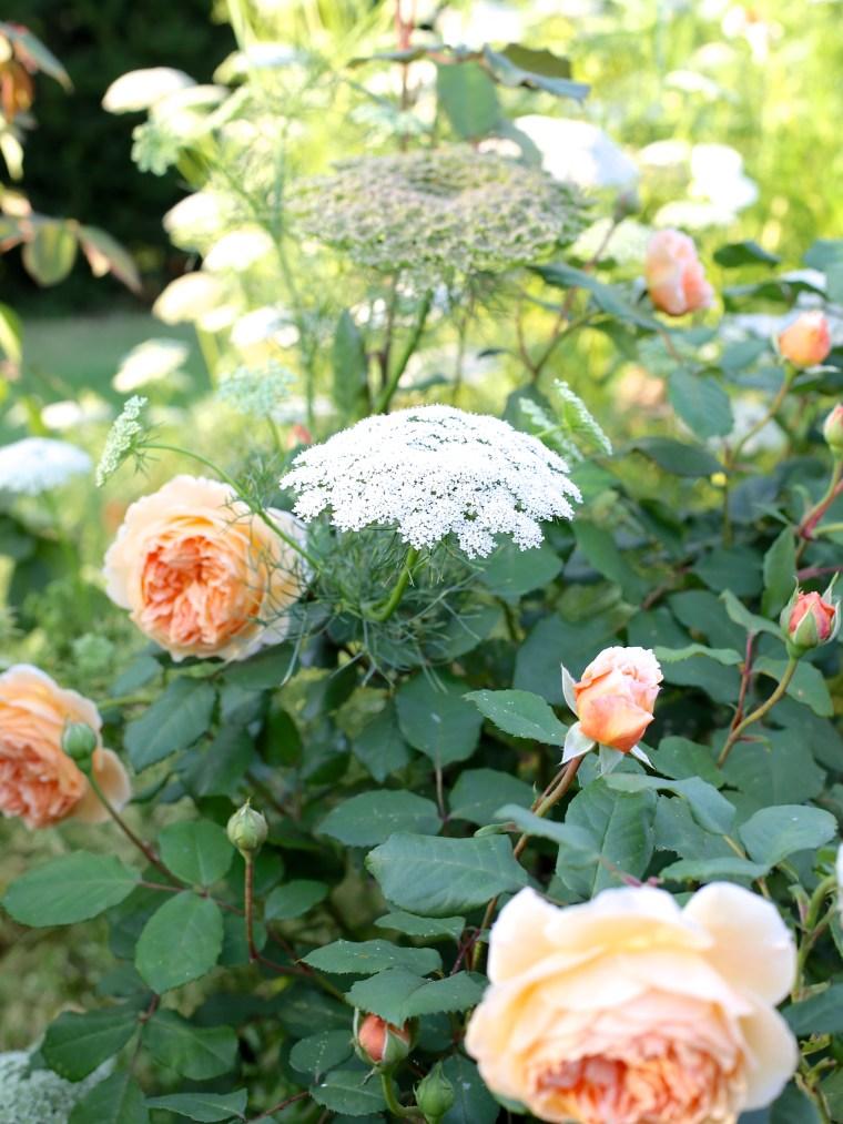 Cutting-Garden-August