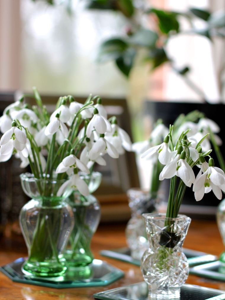Snowdrops displayed in miniature glass vases.