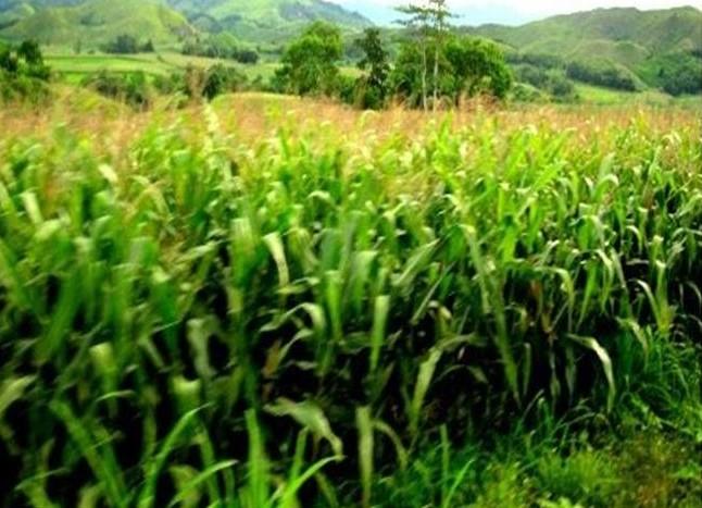 Economy of Ifugao Province