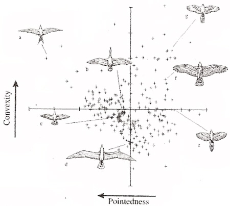 duck wing diagram 1993 ford ranger ignition wiring bird flight graph showing variation among different species of birds in the relative pointedness and convexity their