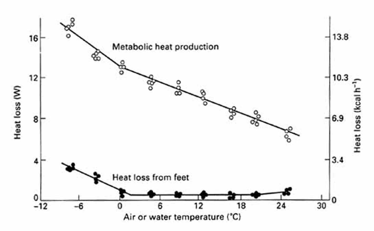 Bird Energy Balance And Thermoregulation