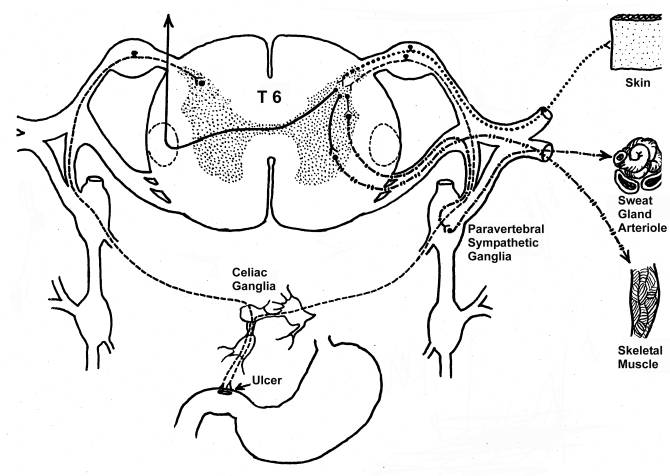 The Motor Division Of The Nervous System Carries Nerve