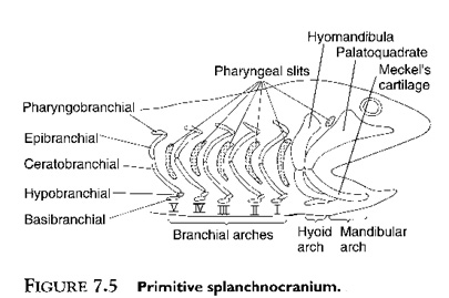 Labeled Diagram Of A Whale Shark, Labeled, Free Engine