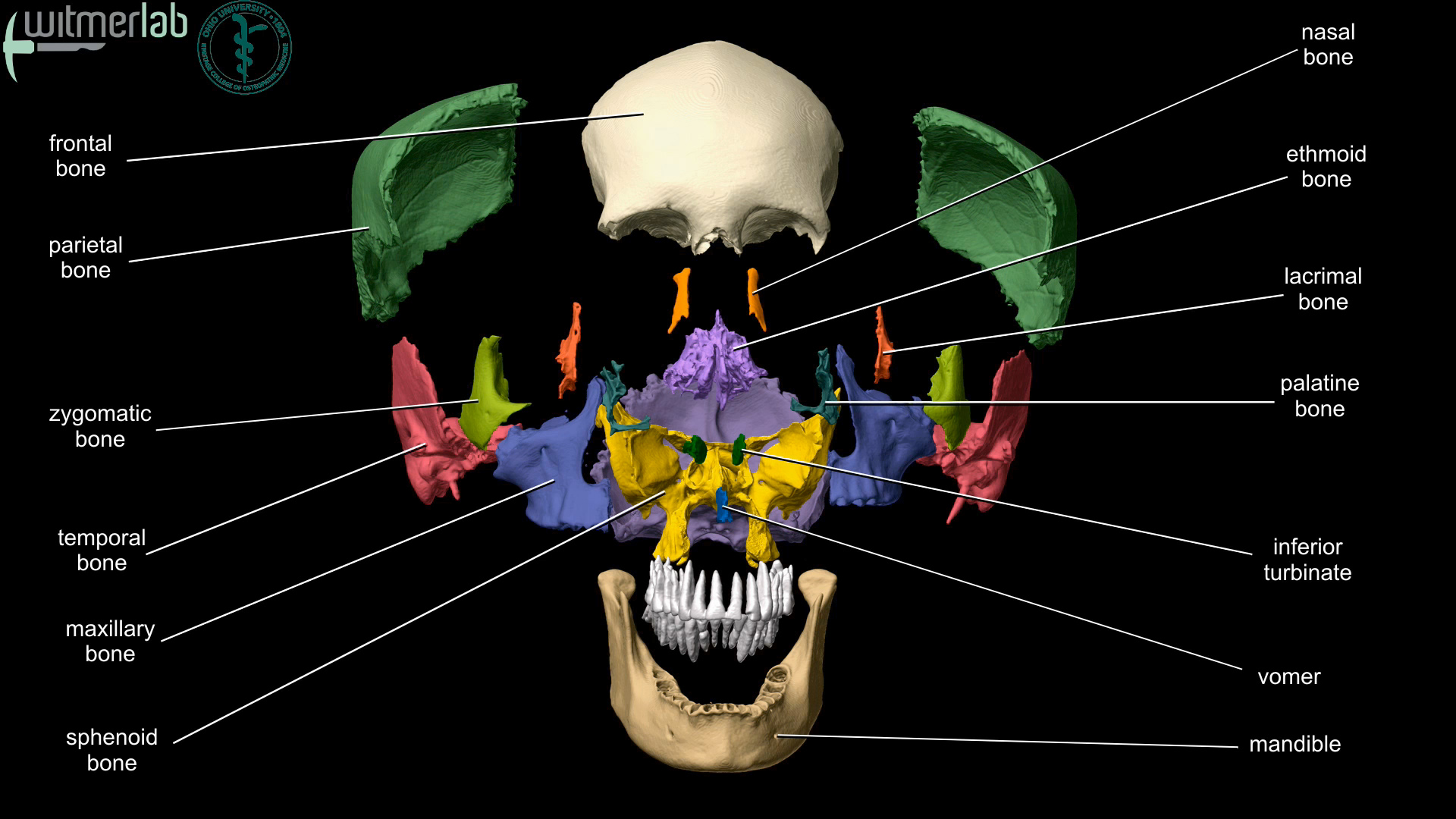 human skull bones diagram labeled what part of speech is ou hcom 3d interactive anatomy