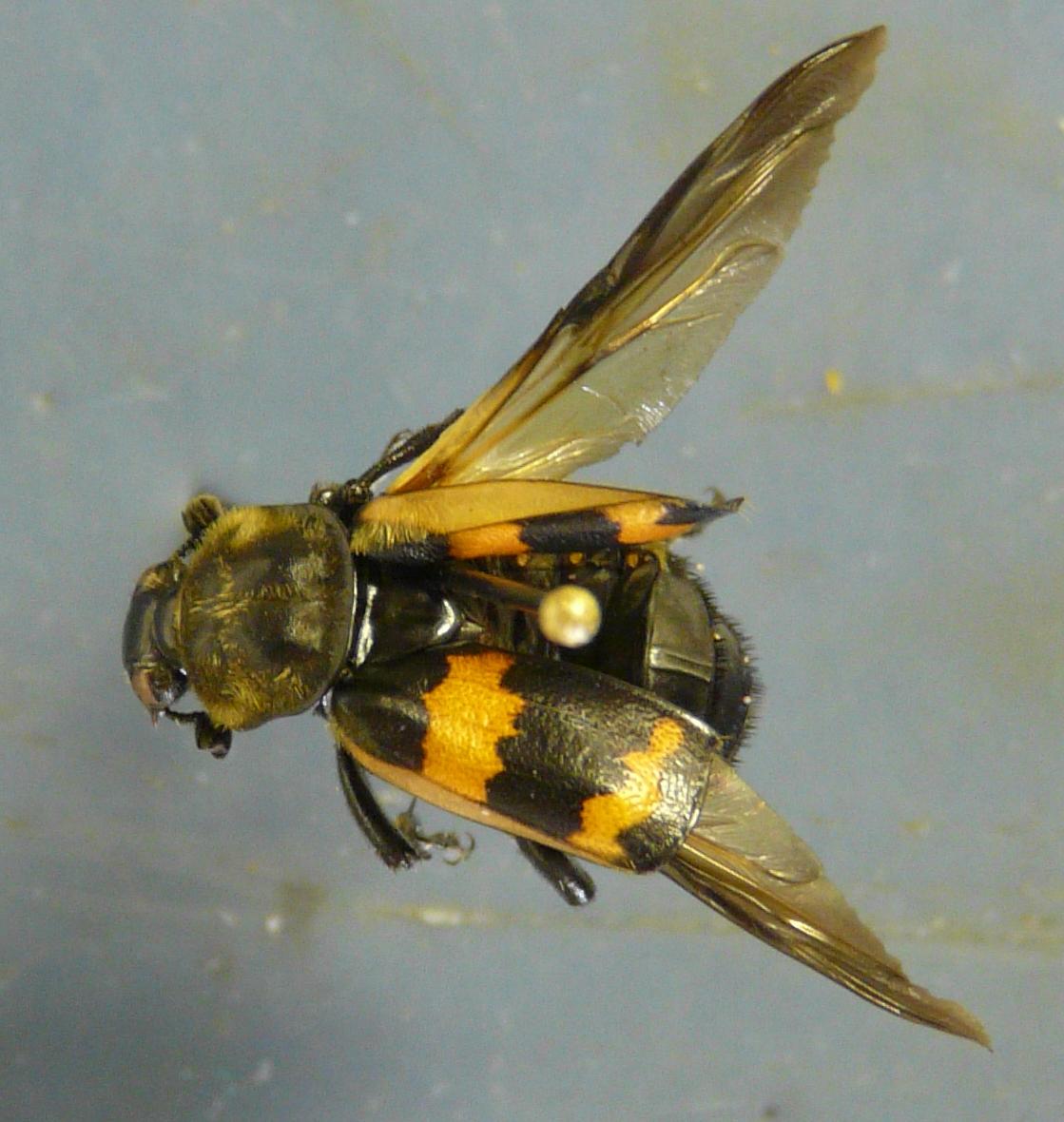 Entomology Worksheet