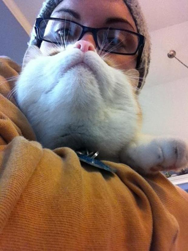 Cat Bearding