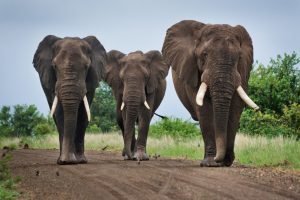 Three Learning and Development elephants
