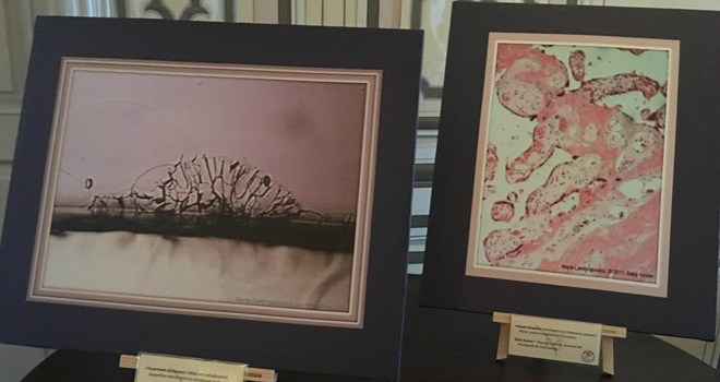 """Οπτικοακουστικό υλικό από την εκδήλωση """"Επιστήµη & Τέχνη µέσα από το Μικροσκόπιο"""" στο σπίτι του Μ.Χατζηδάκι"""