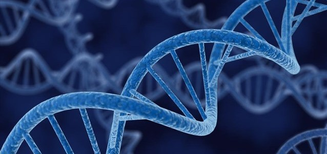 Πρόταση για απουσία ρύθμισης σε ορισμένες μορφές επεξεργασίας γονιδίων στην Ιαπωνία