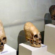 Ίκα Περού: Μια επίσκεψη στο μουσείο με τα επιμήκη κρανία.