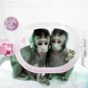 ΗΠΑ: Νομοθέτες πιέζουν τα Εθνικά Ινστιτούτα Υγείας (NIH) να ελαττώσουν τις έρευνες σε μη ανθρώπινα πρωτεύοντα ζώα