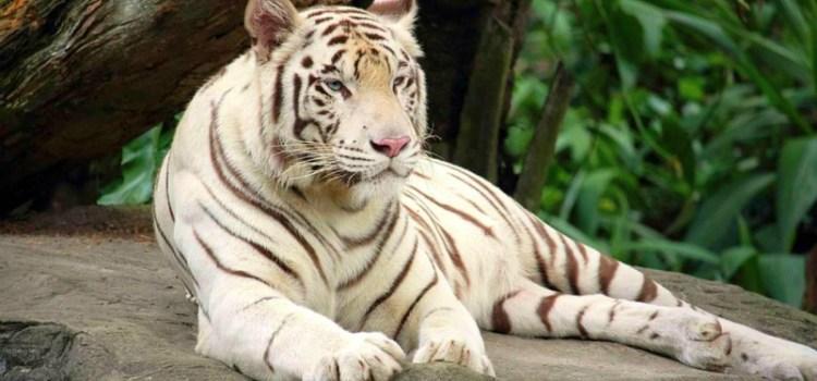 Δραματική προειδοποίηση του ΟΗΕ: 1 εκατομμύριο είδη απειλούνται με εξαφάνιση