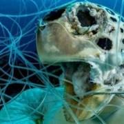 H εφιαλτική εικόνα που κέρδισε βραβείο διαγωνισμού υποβρύχιας φωτογραφίας από τον φωτογράφο Σέιν Κρος