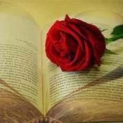 Παγκόσμια Ημέρα Βιβλίου, χωρίς διεθνείς εκθέσεις