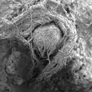 Βρέθηκε το αρχαιότερο σκοινί ηλικίας 50.000 ετών των Νεάντερταλ