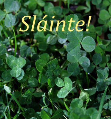 Sláinte text on a background of clover.