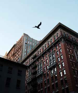 low angle view of bird flying above the building