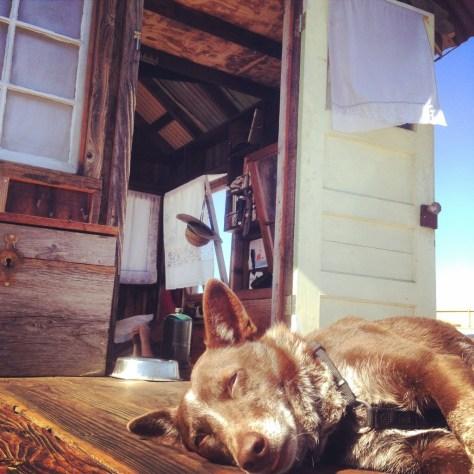 Hazel kicks it in the sun.