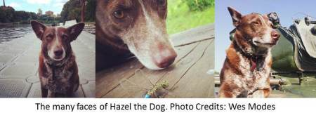 Hazel the dog