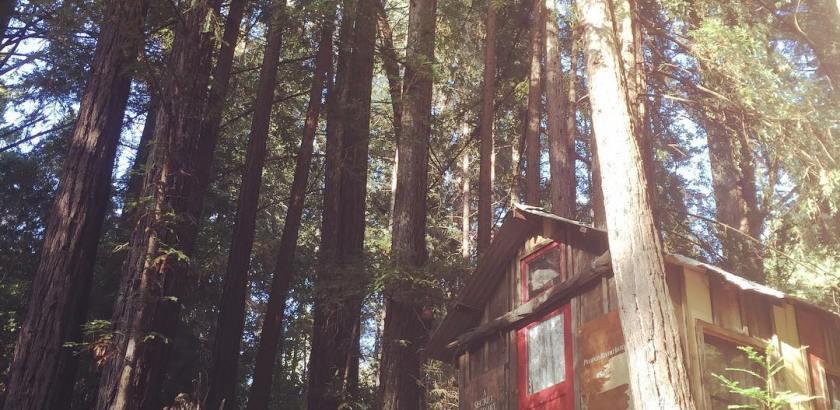 Secret History shantyboat nestled in the redwoods in California