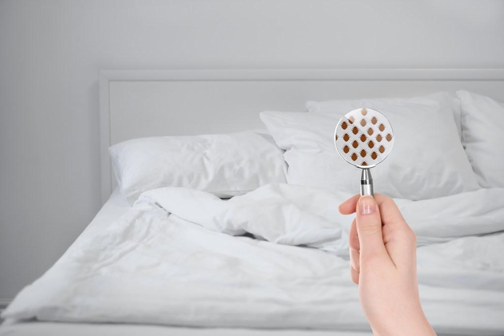 Infestation dans un lit
