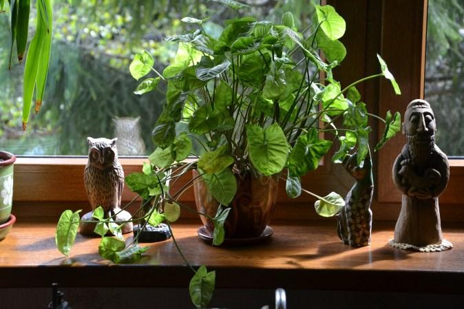 cuidar-plantas-interior planta verde frondosa en el alfeizar de la venana, con adorno de buho, de guepardo y de monje de cerámica
