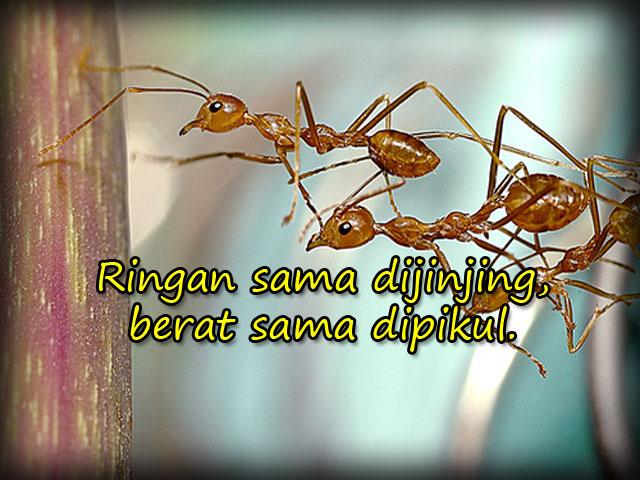 Ringan sama dijinjing berat sama dipikul  Pepatah Melayu