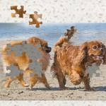 Jigsaw Masterpieces: Cute Lovely Dogs Nintendo Switch Jigsaw Masterpieces: Cute Lovely Dogs_3