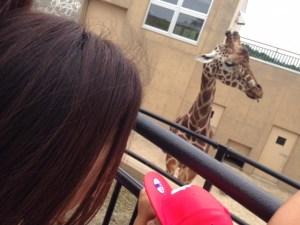 旭山動物園で間近で見れるキリン